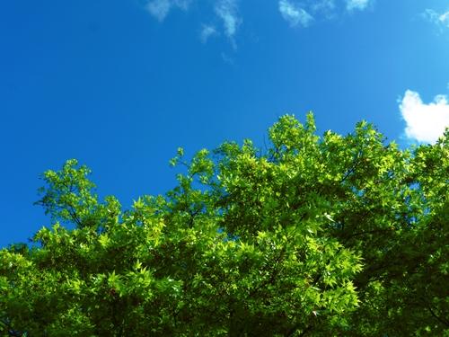多磨霊園~緑豊かな公園墓地~