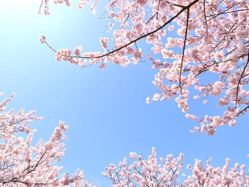 谷中霊園~日本の歴史に触れる霊園~