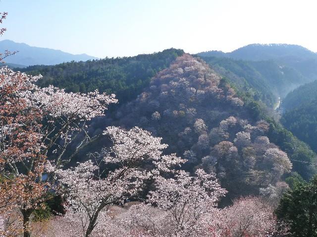 姫神小桜は価格が安く地元から愛される人気の石!!