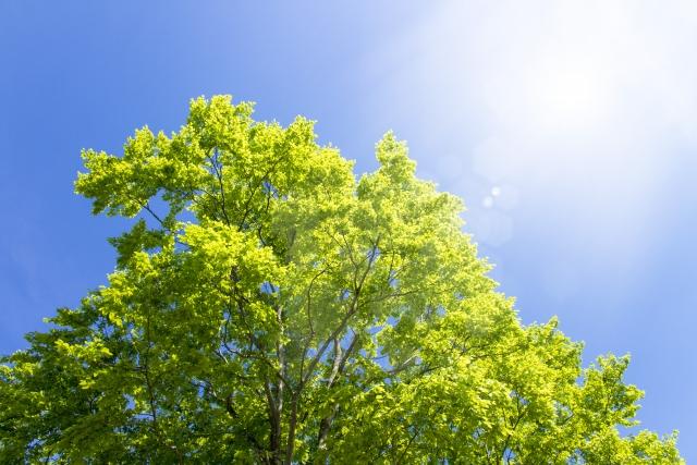 新しいお墓のスタイル樹木葬